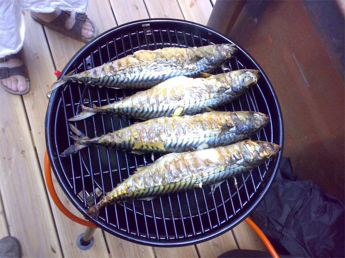wm2010-makrelen